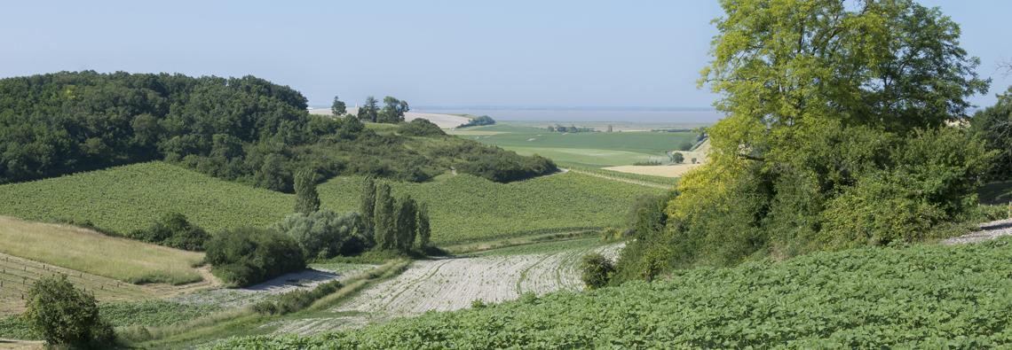 Estuaire-de-la-Gironde_colline